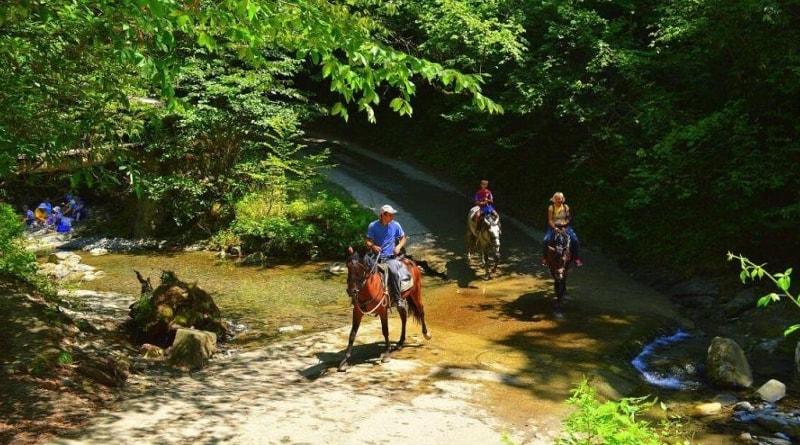Катание и прогулки на осликах и лошадях в Туапсинском районе
